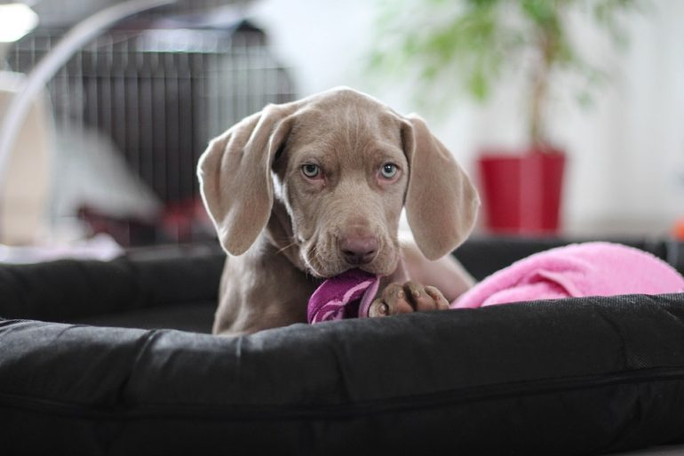 Top 10 Female Dog Names And Their Origins Anguspost