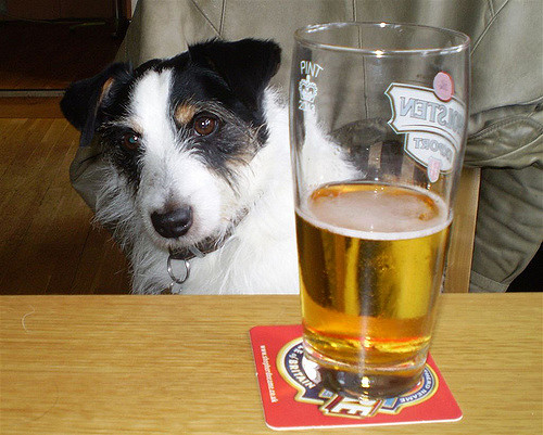A dog with a pint of beer in a bar
