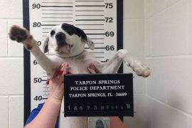 Willow the dog gets a mugshot in Florida