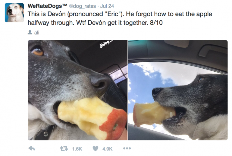 Best Dog Instagram
