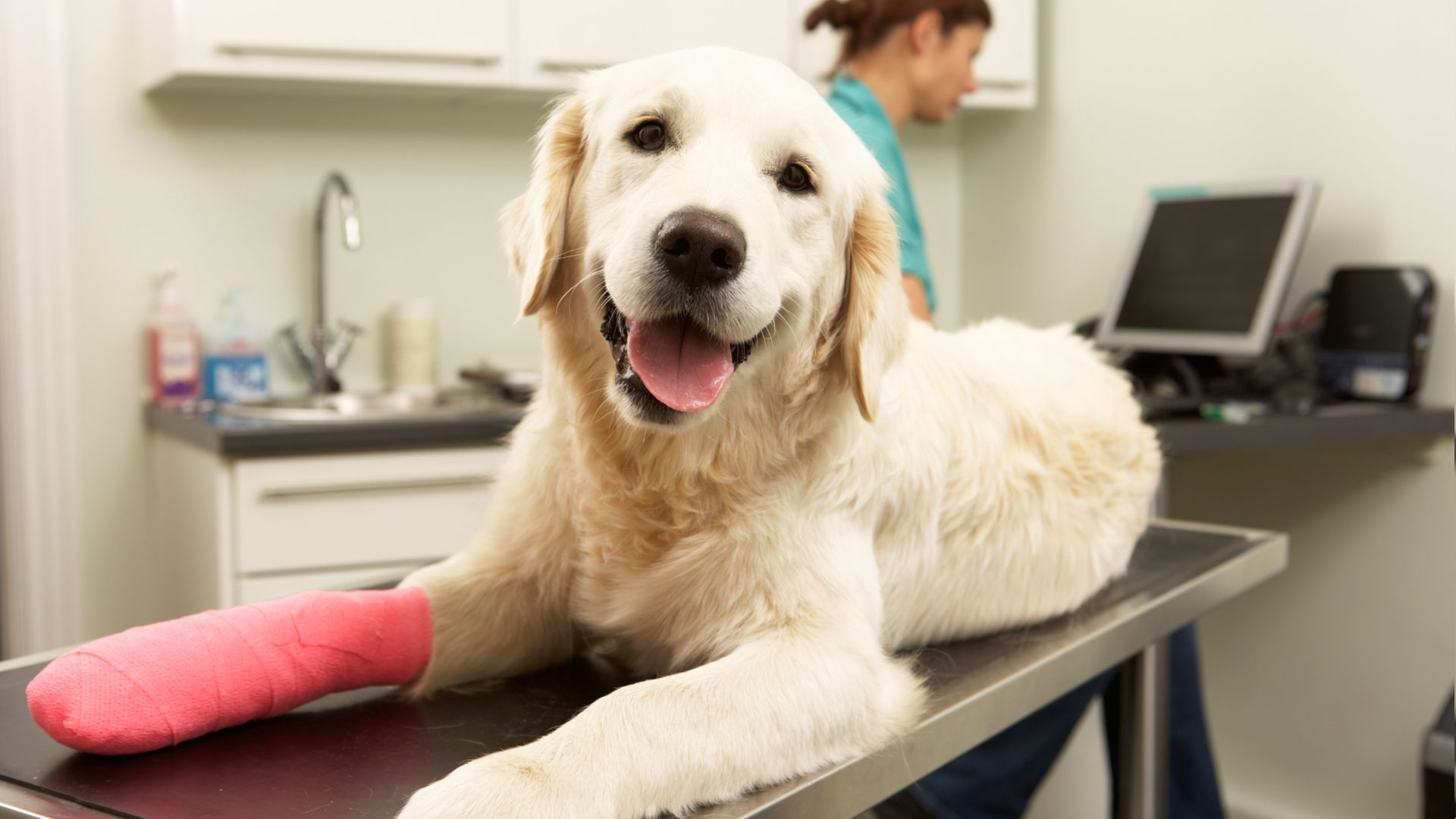 6 Things Your Vet Wants You to Know