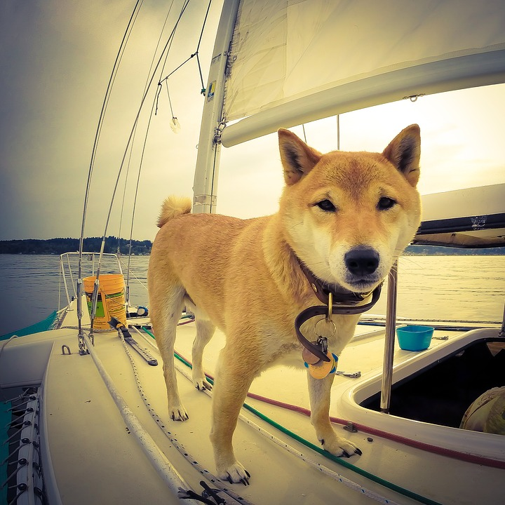 Adorable dog on a sailboat