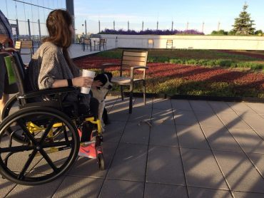 Harrison the dog with my wheelchair